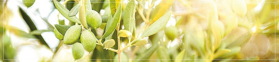 Olivenöl mittel fruchtig