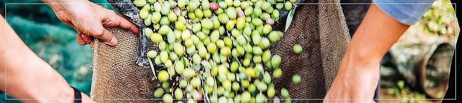 Olivenöl mild