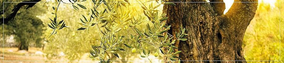 Olivenöl mit Aroma