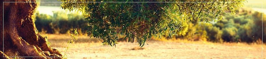 Olivenöl DOP