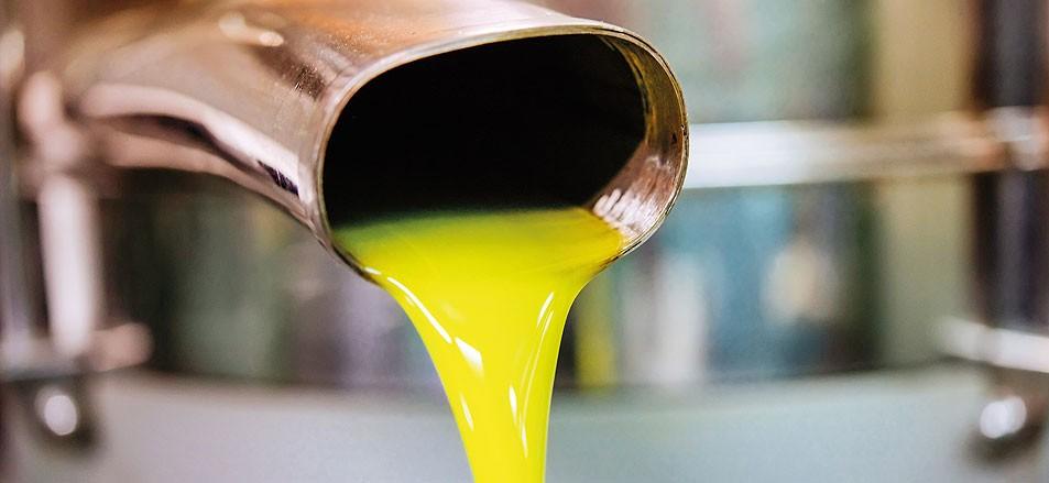 Olivenöl – wie das flüssige Gold unsere Gesundheit stärkt