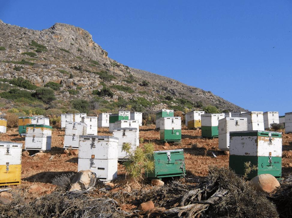Bienenstock in den Bergen Kretas
