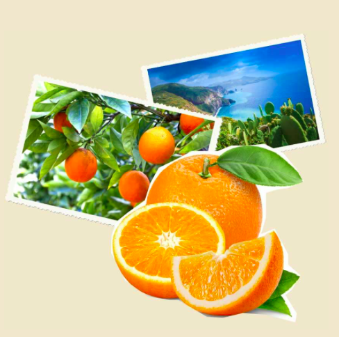 Sizilianische Orangen